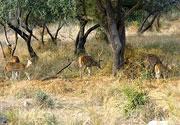 Wildlife-Rajasthan_n&wl