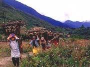 arunachal-malinithan