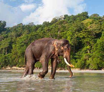 Andaman7
